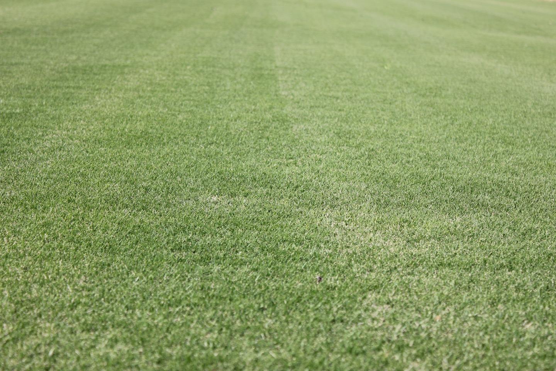 芝の販売・管理